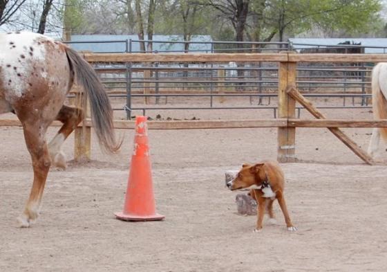 dog meet horse