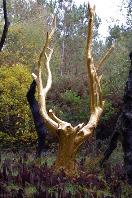 merlin u2019s forest  broceliande  france