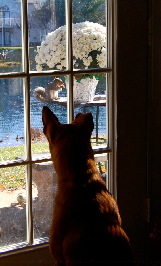 squirrel meet dog...