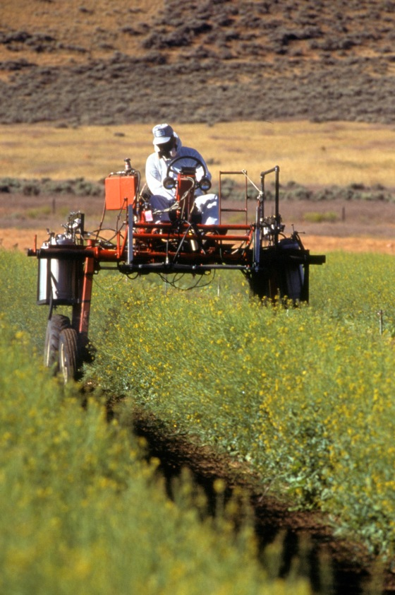 spraying canola- having to wear full protection to apply pesticides to food people are going to eat!  USDA Image Number K7433-13 library of congress photo by Scott Bauer