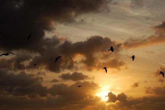 hollywood sunrise seagulls sky