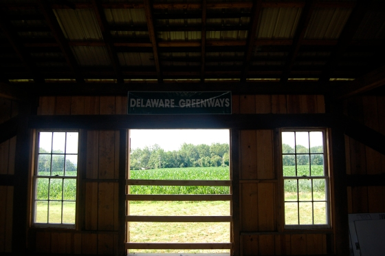 View of cornfields from the barn