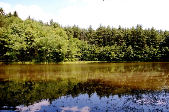 pond on the tumbling waters trail