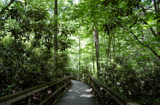 wooden boardwalk trails connect the falls