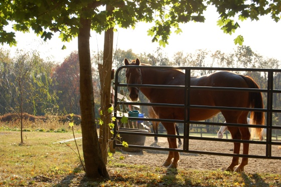 love the light behind the horse